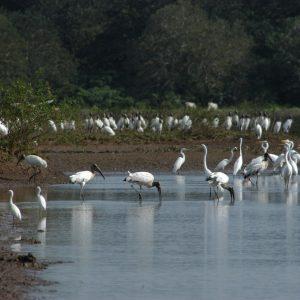 Capacitación de procedimiento y registro para el conteo de aves acuáticas